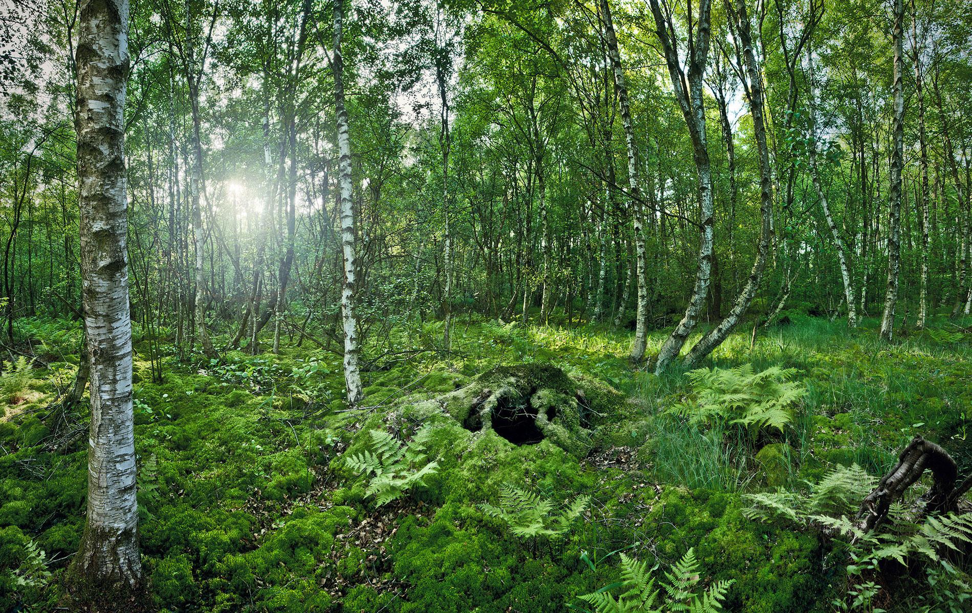 Im Moor | Steinhuder Meer 2013
